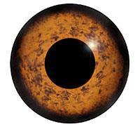 Ögon M30 12mm