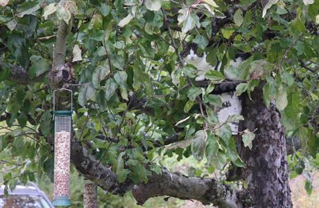 Katt spanar på fåglar