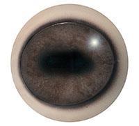 Ögon T06 26/30 mm