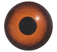 Ögon B20
