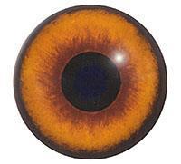 Ögon B30 16mm