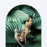 Gargoyle-gecko, Rhacodactylus auriculatus