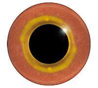 Ögon R07 7mm