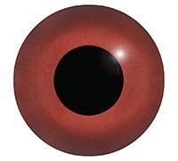 Ögon L27