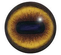 Ögon E31 22mm
