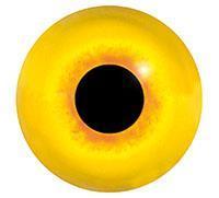 Ögon M60 8mm