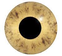 Ögon R12 10mm