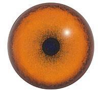 Ögon B11