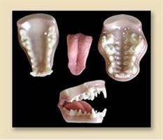 Utter/otter tänder, medium