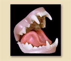 Järv/wolverine tänder, medium