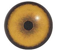 Ögon B09