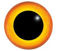 Ögon M27 24mm