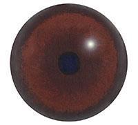 Ögon B16 16mm