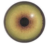 Ögon B12 22mm