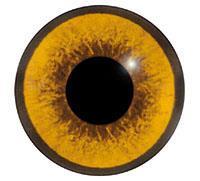 Ögon M53 10mm