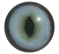 Ögon H41 12mm