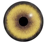 Ögon B06 22mm