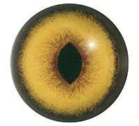 Ögon U13