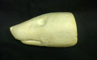 Grävling/badger huvud