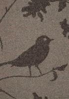 Birdy, Beech