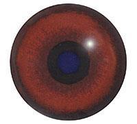 Ögon B27 20mm