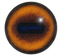Ögon E25