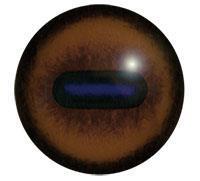 Ögon E18 26mm