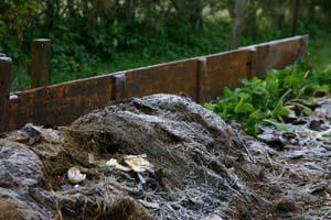 Täckodling ger större skördar och gynnar många arter