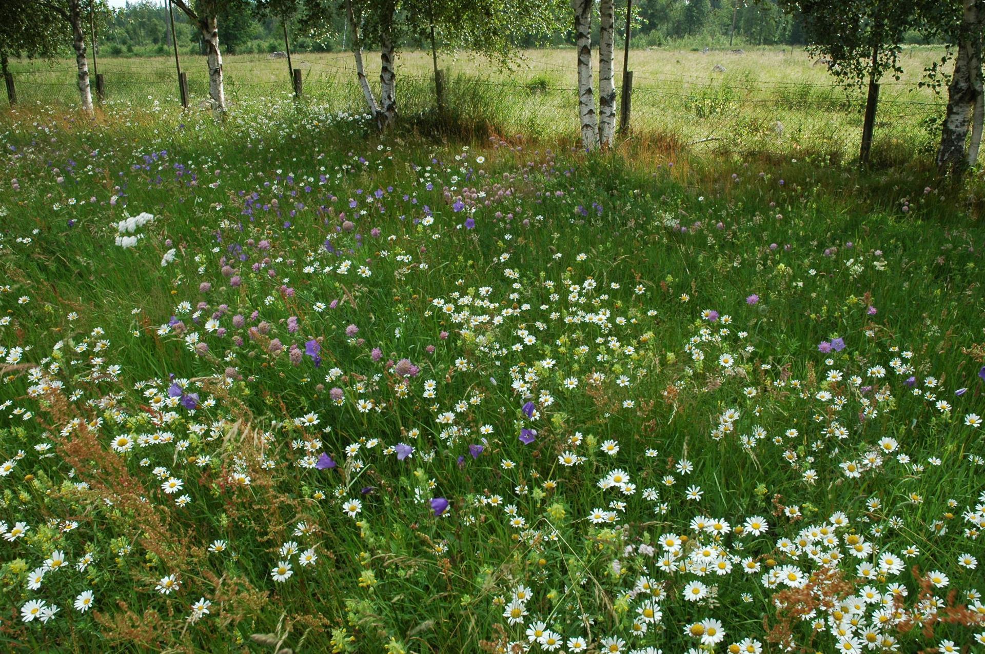 Artrik blomsteräng