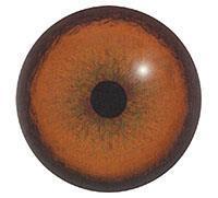 Ögon B17 16mm