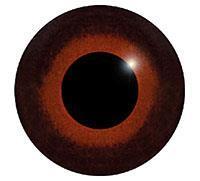 Ögon M13 12mm