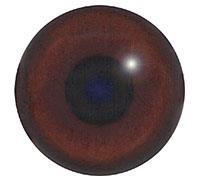 Ögon B15