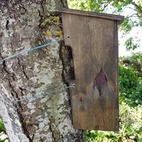 Trädkryparholk