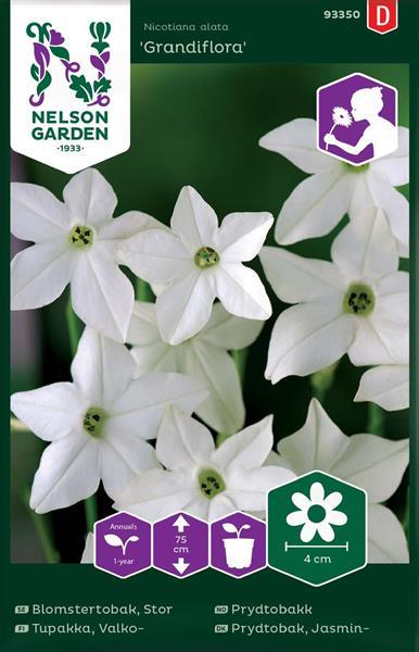 Blomstertobak Stor-, Grandiflora