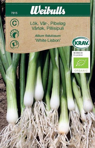 Lök Vår- 'White Lisbon' Krav Organic