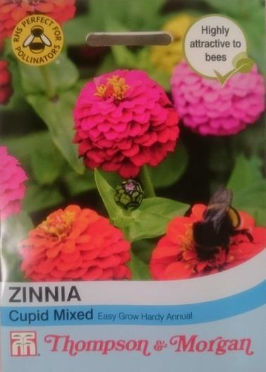 Zinnia 'Cupid Mix'