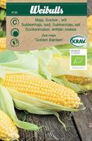 Majs Socker- 'Golden Bantam' Krav Organic