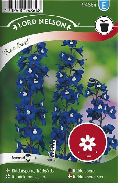 Riddarsporre Trädgårds- 'Blue Bird'