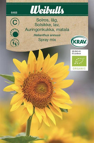 Solros 'Compact Spray' mix låg KRAV Organic