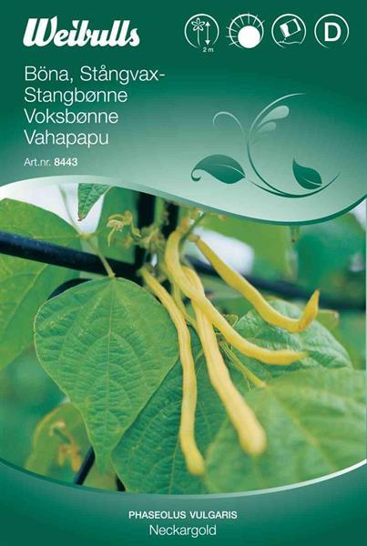 Böna Stångvax- 'Neckargold'