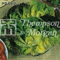 Sallat Mix 'Salad Leaves'