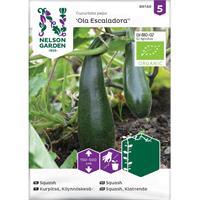 Squash Kläng- 'Ola Escaladora' Organic