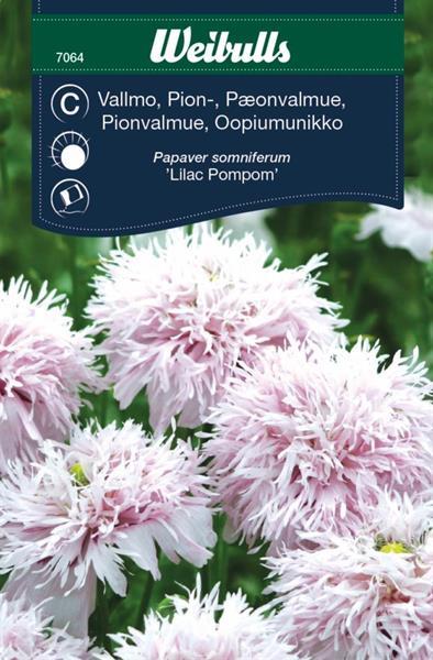 Vallmo Pion- 'Llilac Pompom'