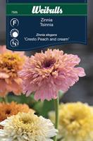 Zinnia 'Cresto Peach and Cream'