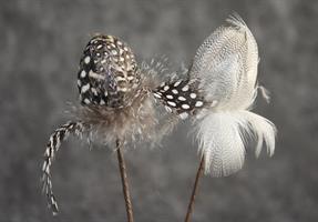 Fjäderägg brun/grå mönst. D3cm 24/fp