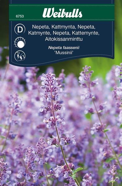 Nepeta Kant- 'Mussinii'