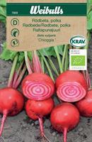 Rödbeta 'Chioggia' Polkabeta Krav Organic
