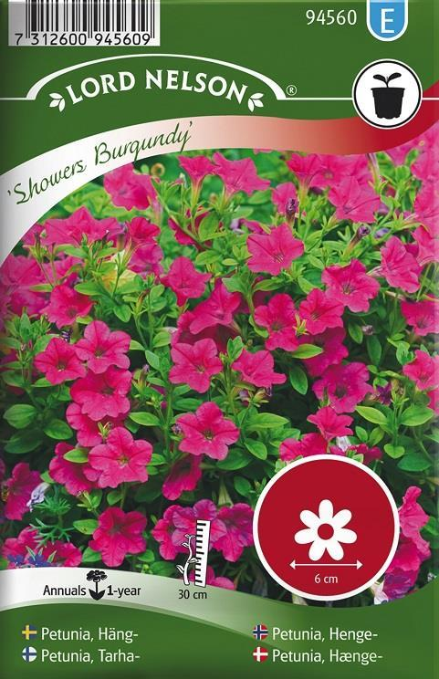Petunia, Häng-, 'Showers Burgundy'