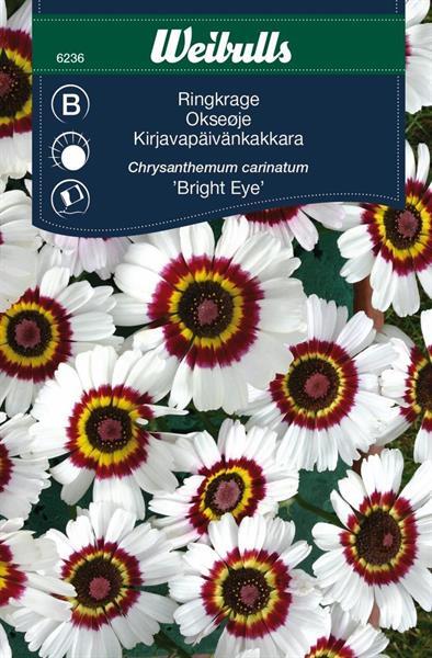 Ringkrage bright eye