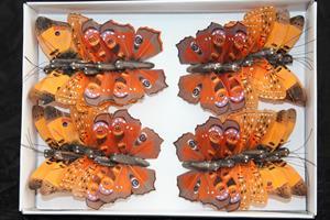 Fjäril orange 7,5cm 24/fp